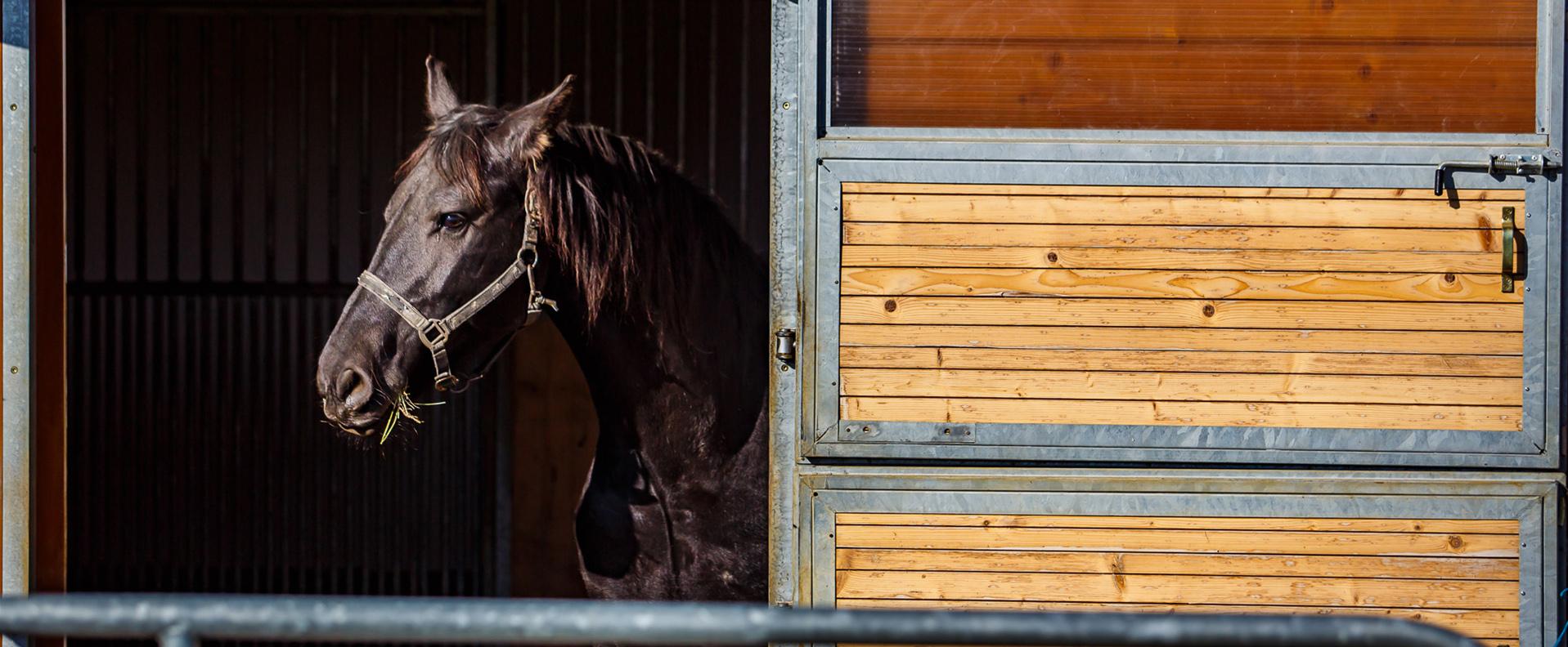 Ako každý vie, hipoterapia je priama alebo nepriama liečba za pomoci koňa.